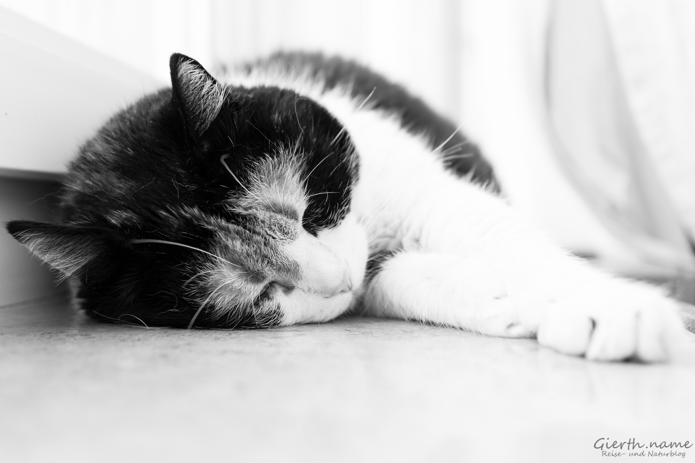 Schlafende Twipsy 2016