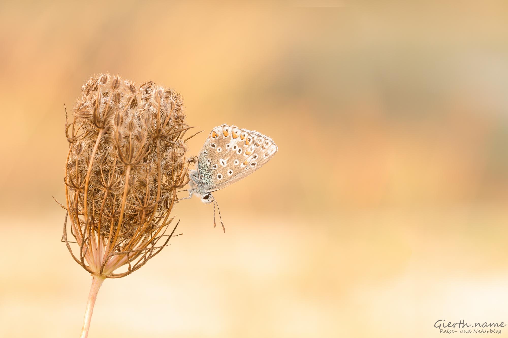 Schmetterlinge zum Herbstbeginn