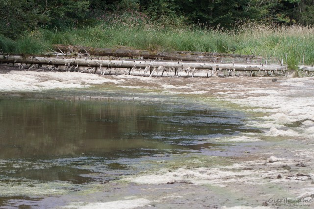 Austrocknendes Gewässer