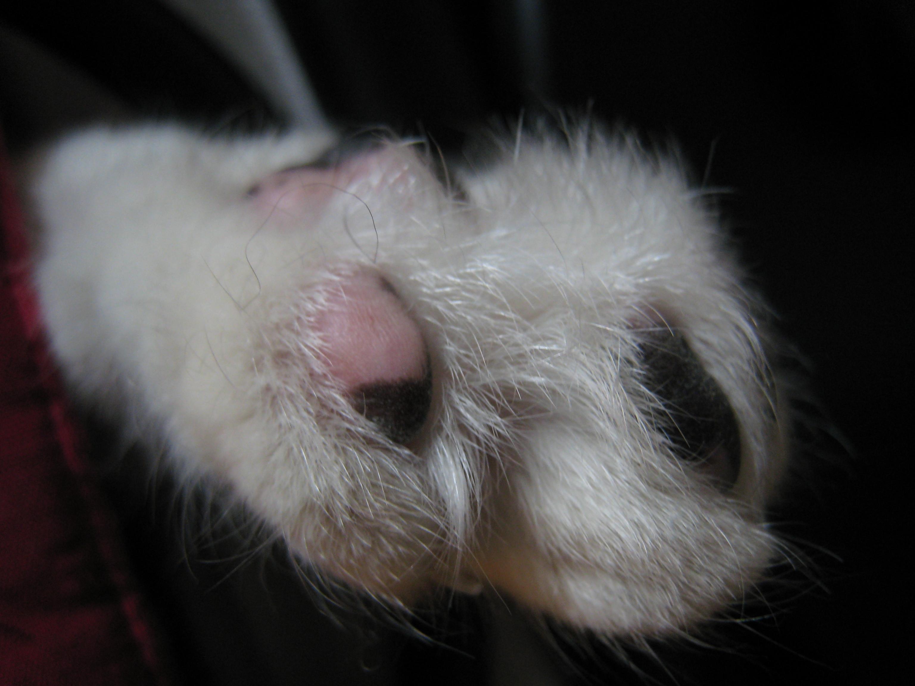 Nichts ist zarter als Katzenfötchen
