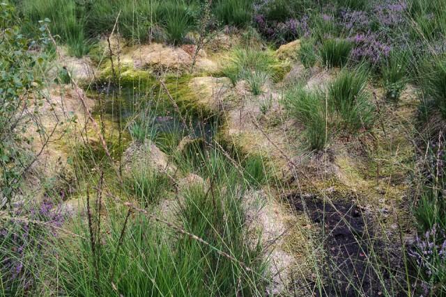 Trocken gefallene Moorschlenke