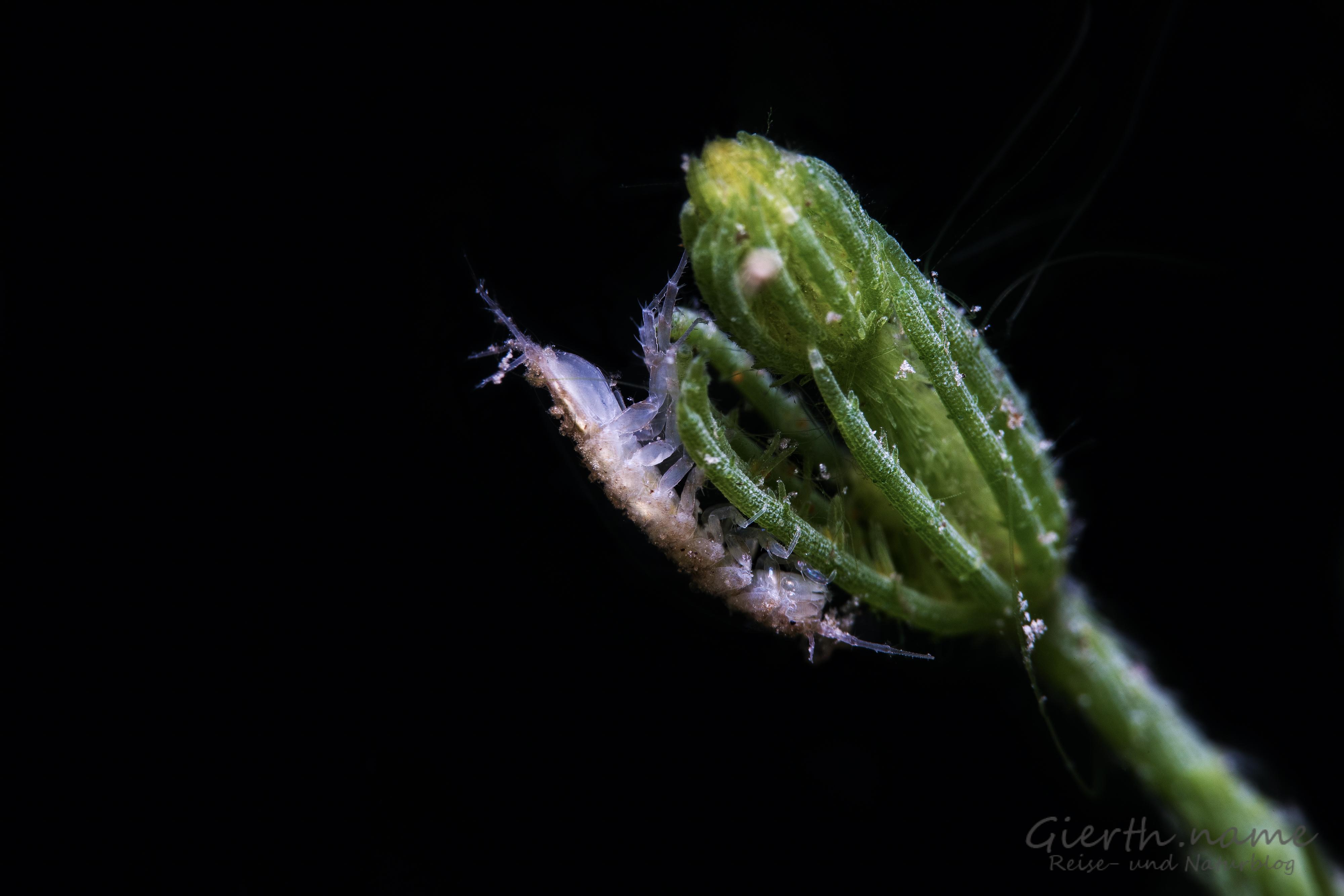 Süßwasser-Critters - Fresh water critters