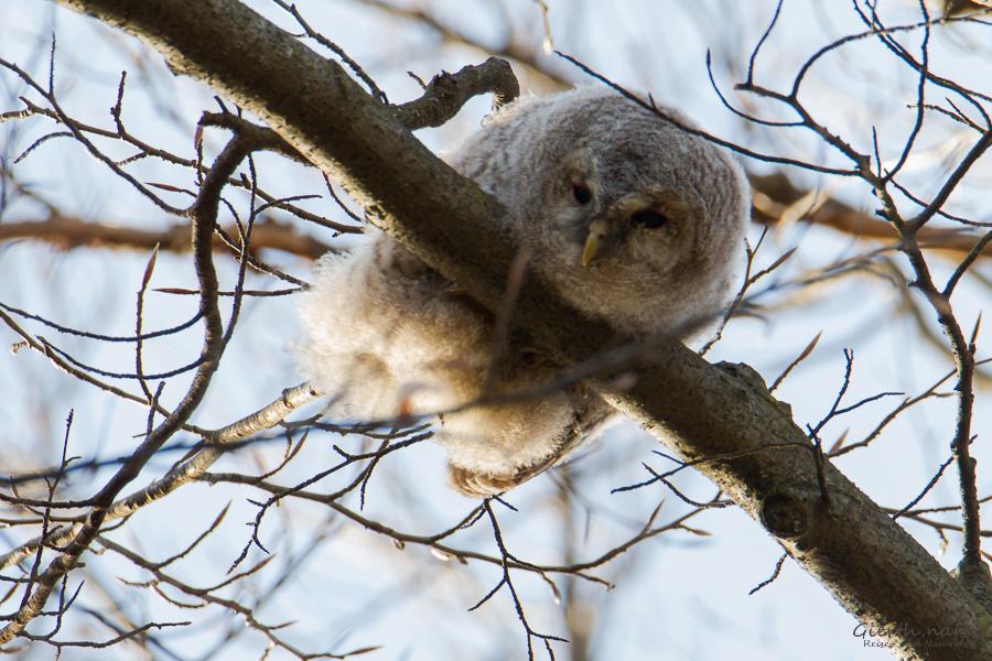 "Termine zur Vogelbeobachtung bei den ""Canoncams"""