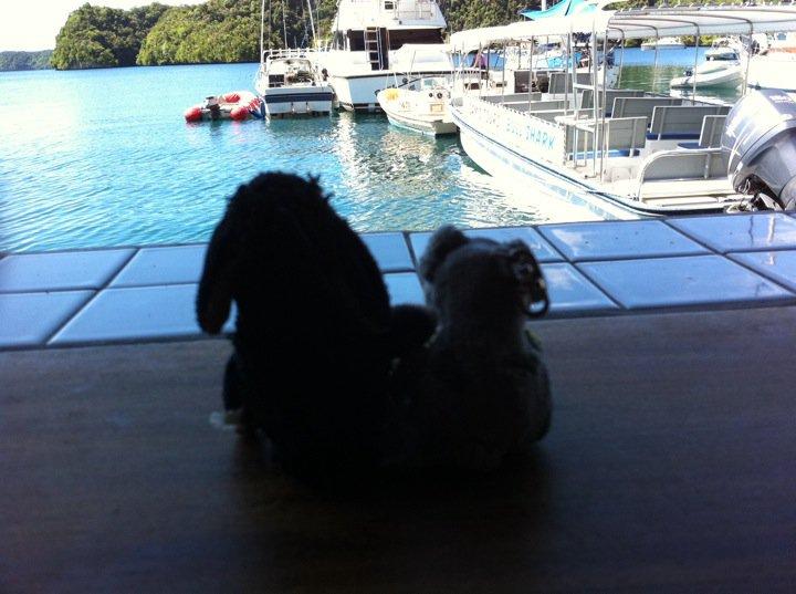 Schäfchen und Schweinchen in Palau