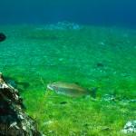 Marcel mit Forelle im Grünen See
