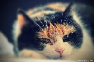 Twipsy krank und neue Fotos