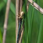 Spinnenopfer
