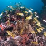 Karibisches Riff