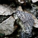 Unbekannter Schmetterling...