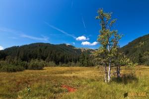 Heimat der Alpen-Smaragdlibelle