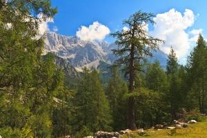 Bachl-Alm am Dachstein und Schönramer Filze