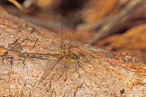 Sterntaler Filze – auch im September ein Paradies für Libellen