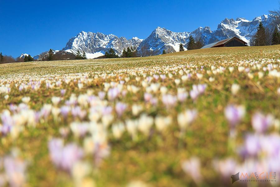 Blick auf den Karwendel