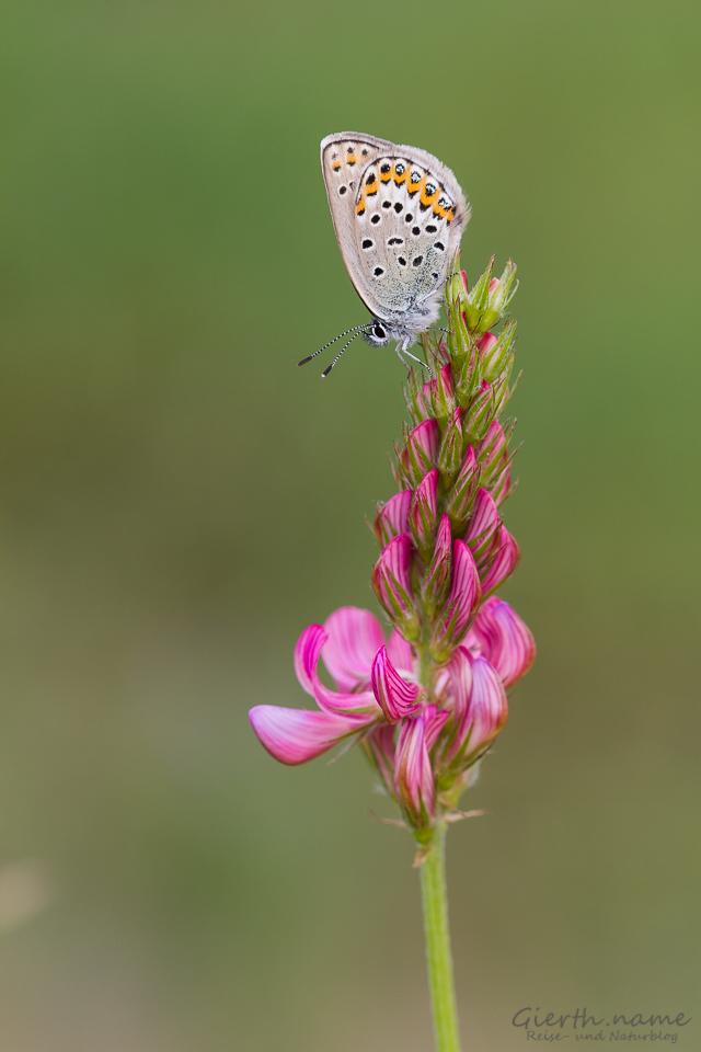 Schmetterlinge freuen sich über den Sommer