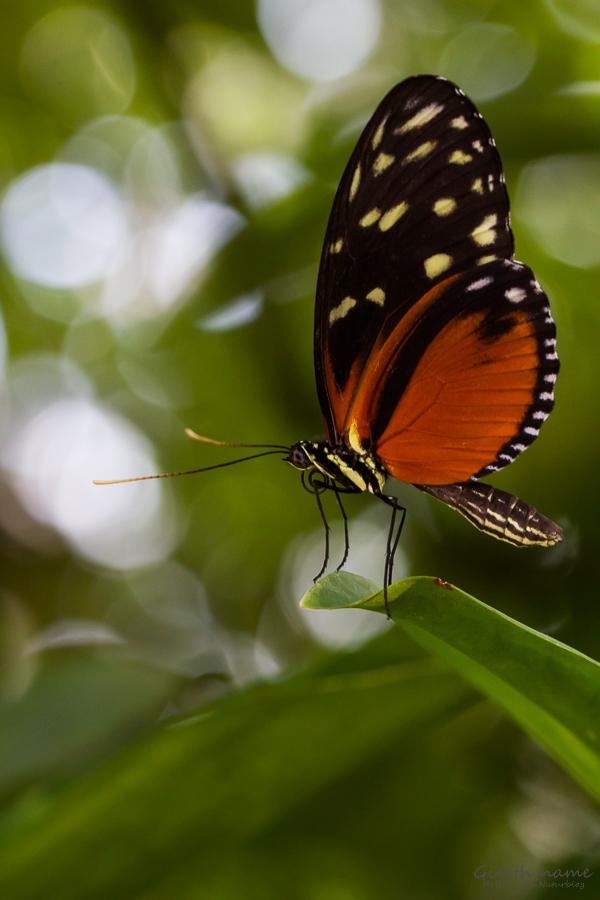 Tropische Schmetterlinge im Botanischen Garten