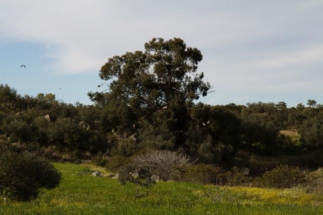 Störche bei Castro Verde