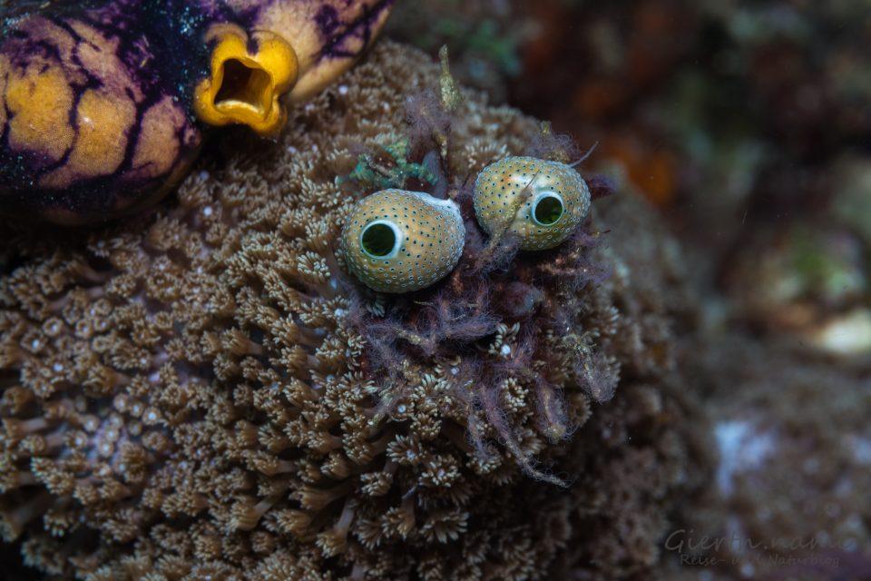 Das Gesicht des Meeres