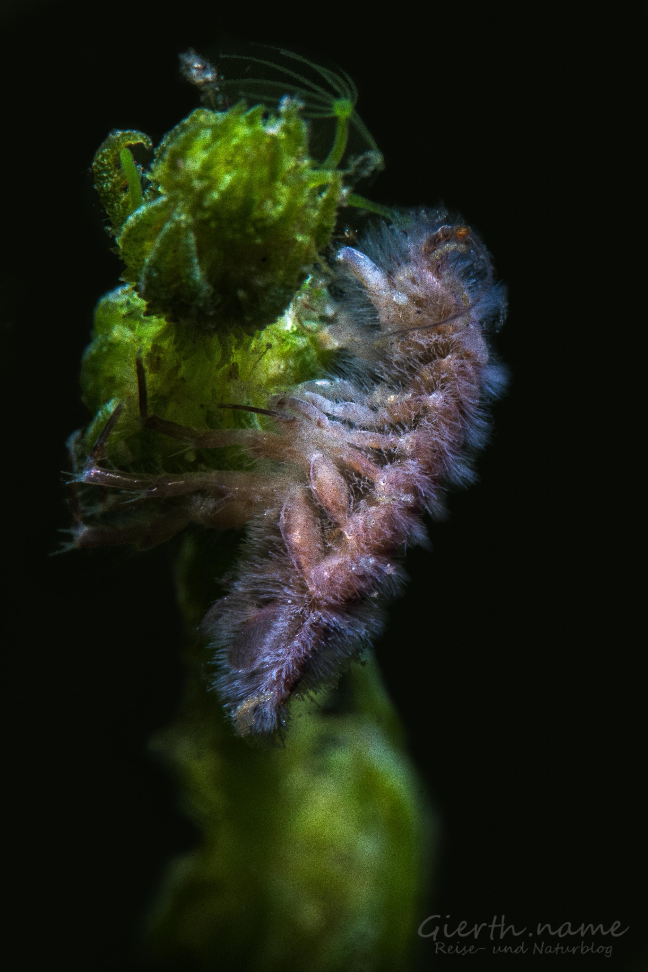 Unbestimmtes Süßwasserungeheuer