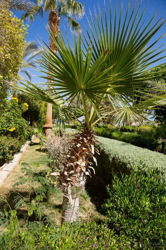 Ein Lob an die Gärtner im Flamenco Beach Resort