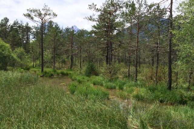 Habitat von C. hylas