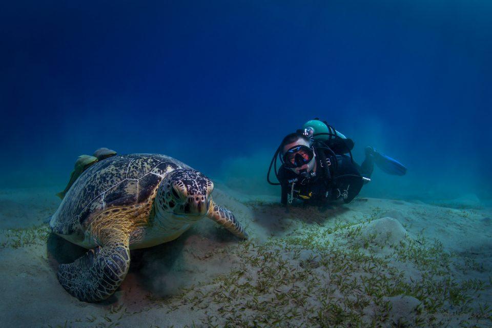 Grüne Schildkröte (links) und Marcel (rechts)