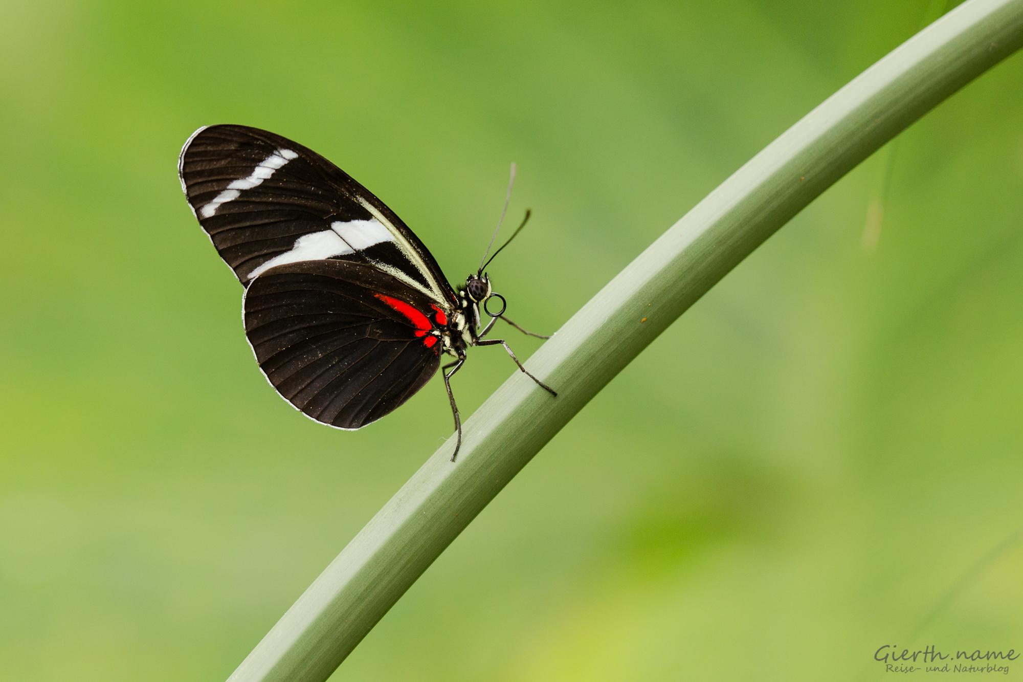Schmetterlinge im Botanischen Garten München