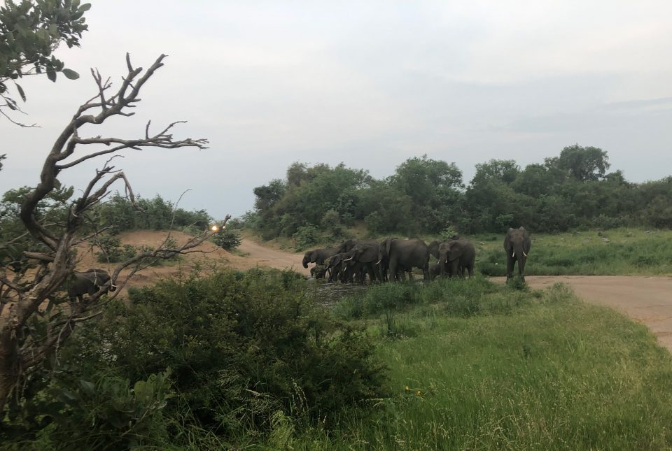 Elefanten blockieren die Strasse