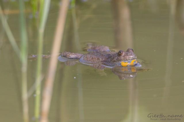 Murnauer Moos – Libellen, Molche und Unken