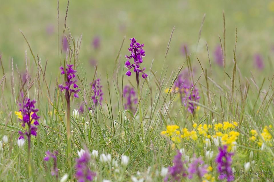 Orchideenwunderland