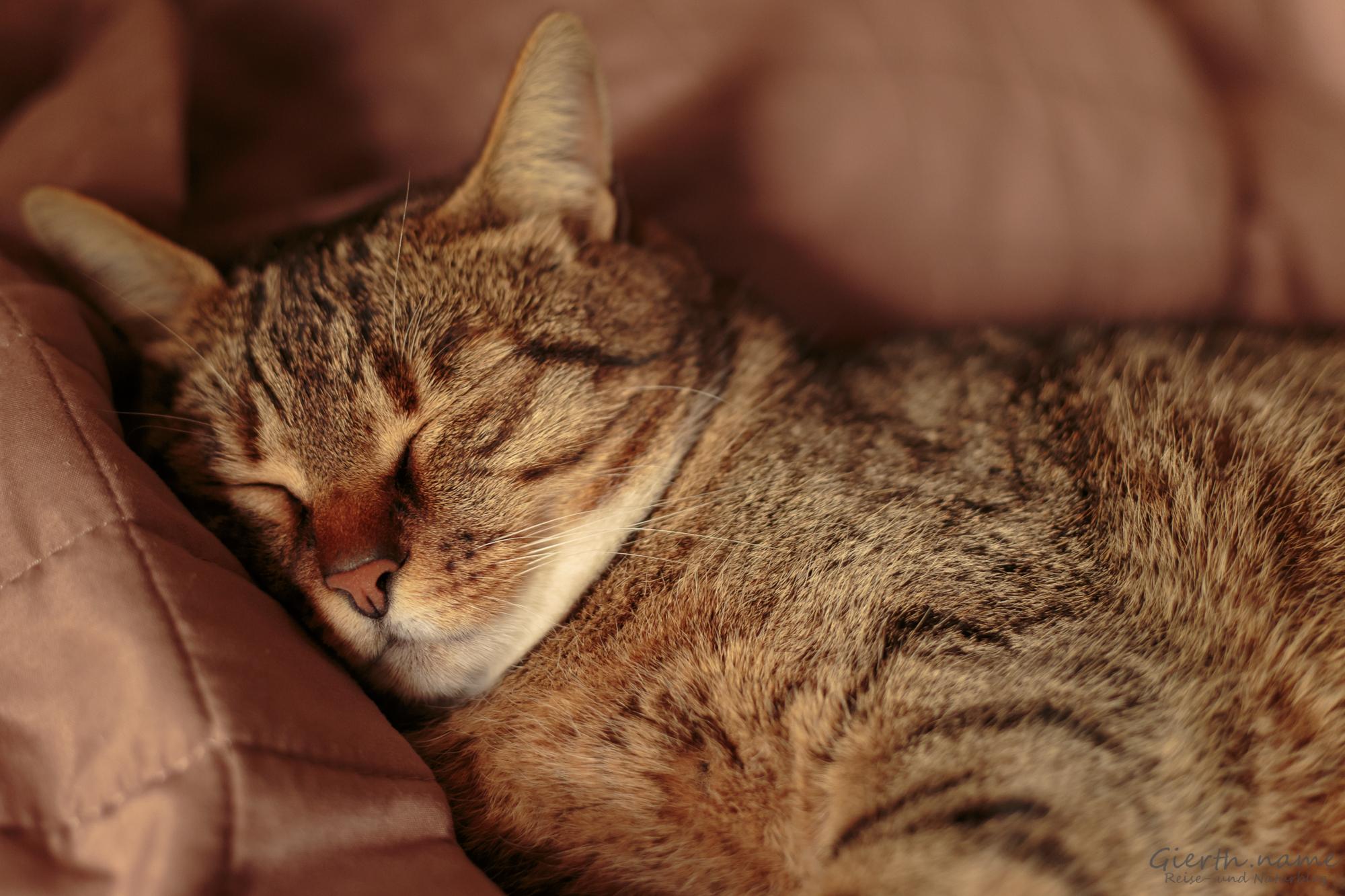 Die Katze Molli