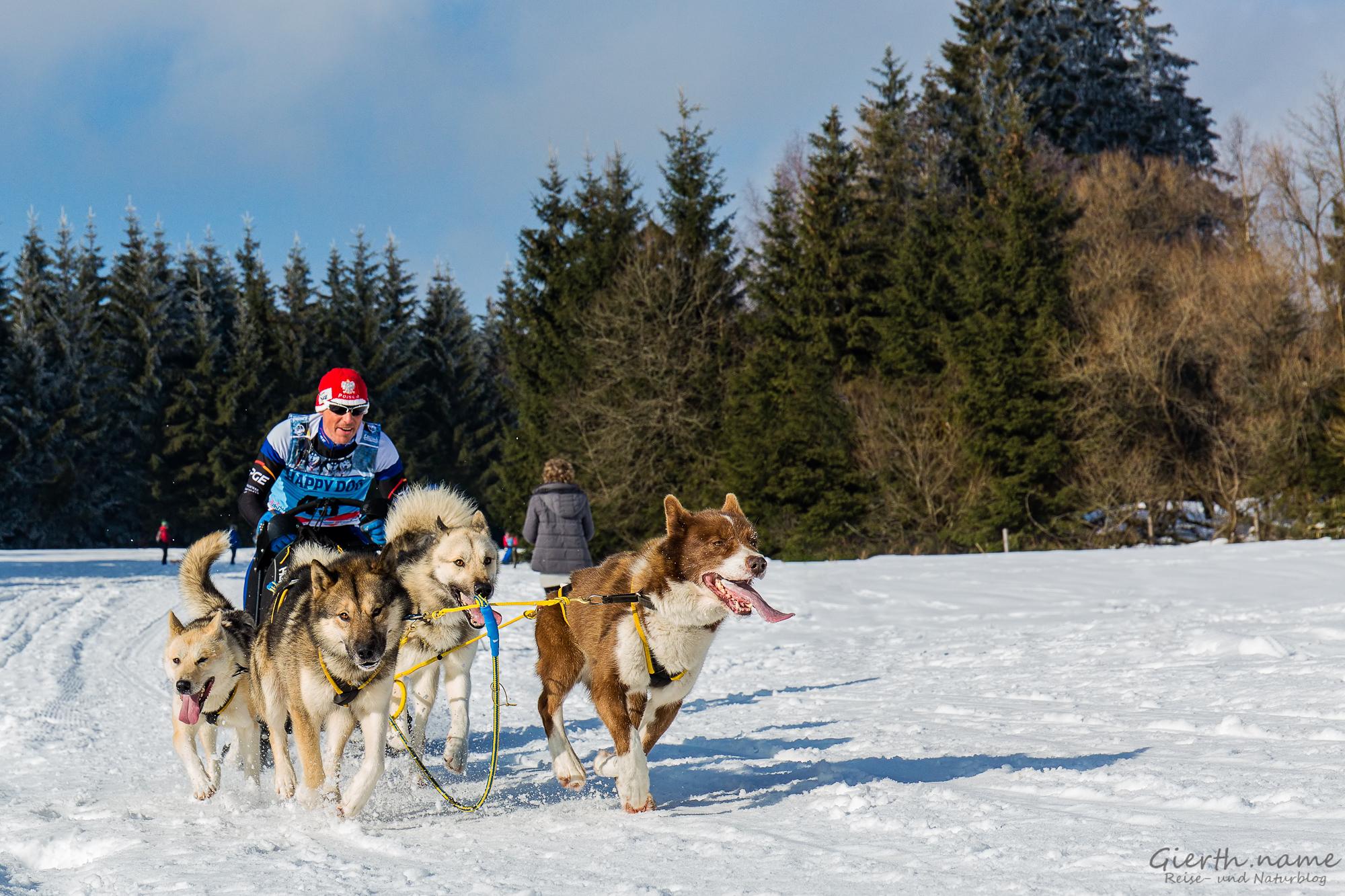 Schlittenhunderennen in Frauenwald am Rennsteig