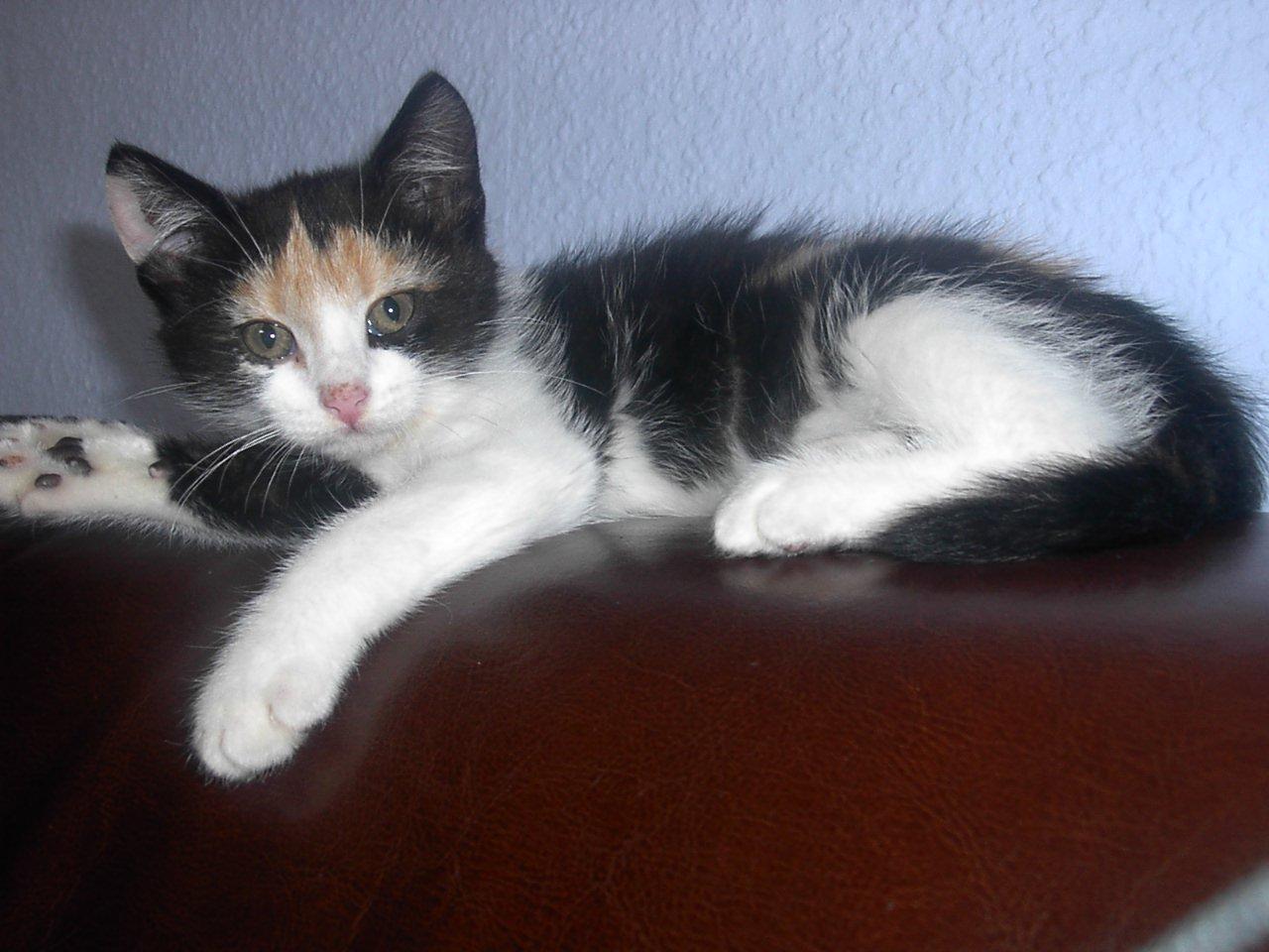 Eine unbeschwerte Katzenkindheit in Neukölln