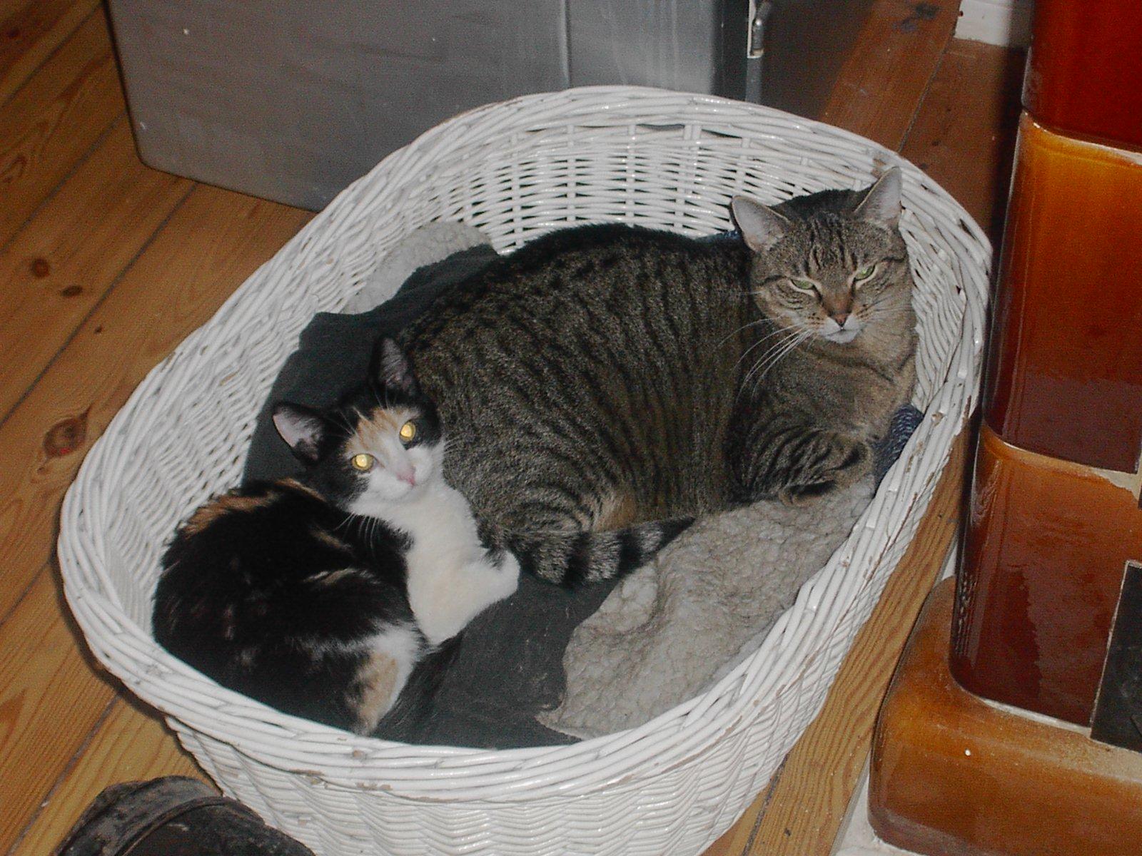 Twipsy und Tiggy vorm Ofen