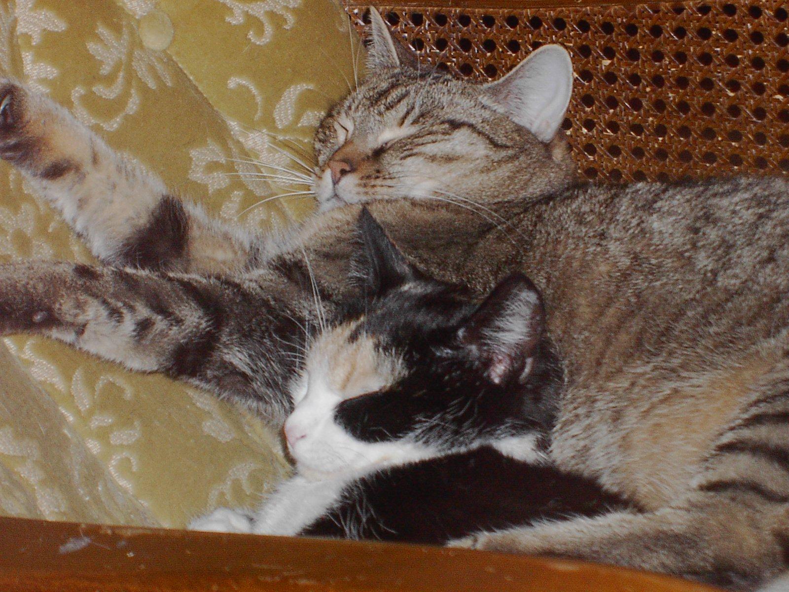 Twipsy und Tiggy