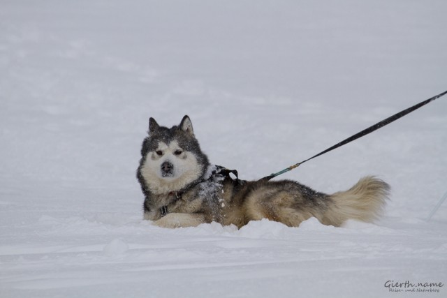 Fauler Hund ;-)