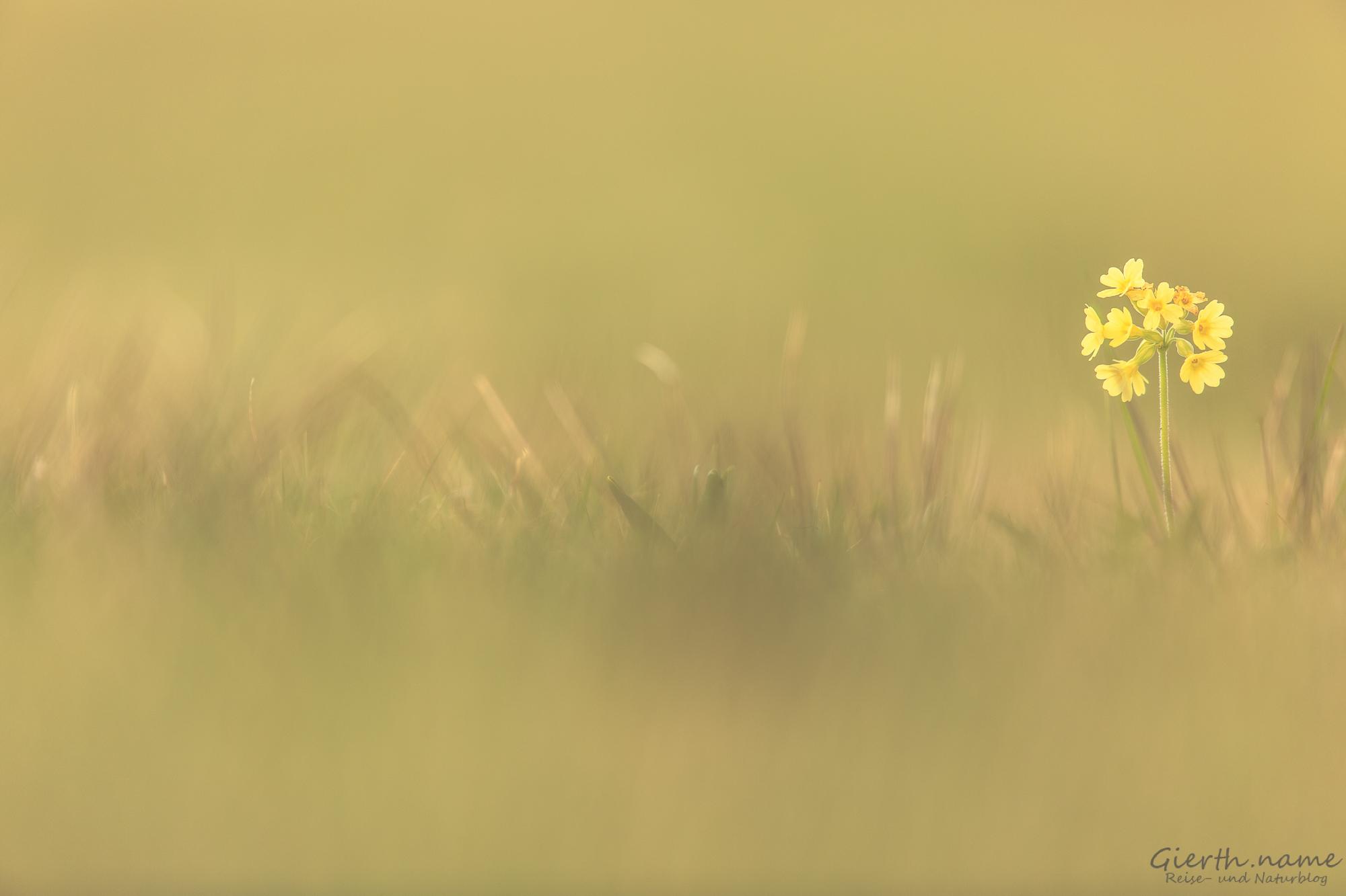 Frühling in den Spatenbräufilzen