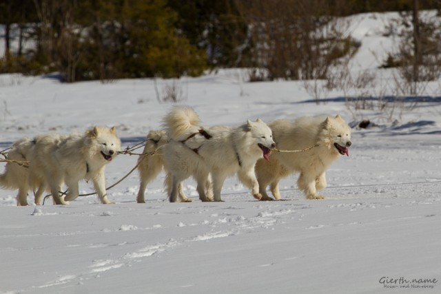 Schlittenhunderennen Wallgau 2015