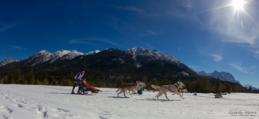 Schlittenhunderennen in Wallgau