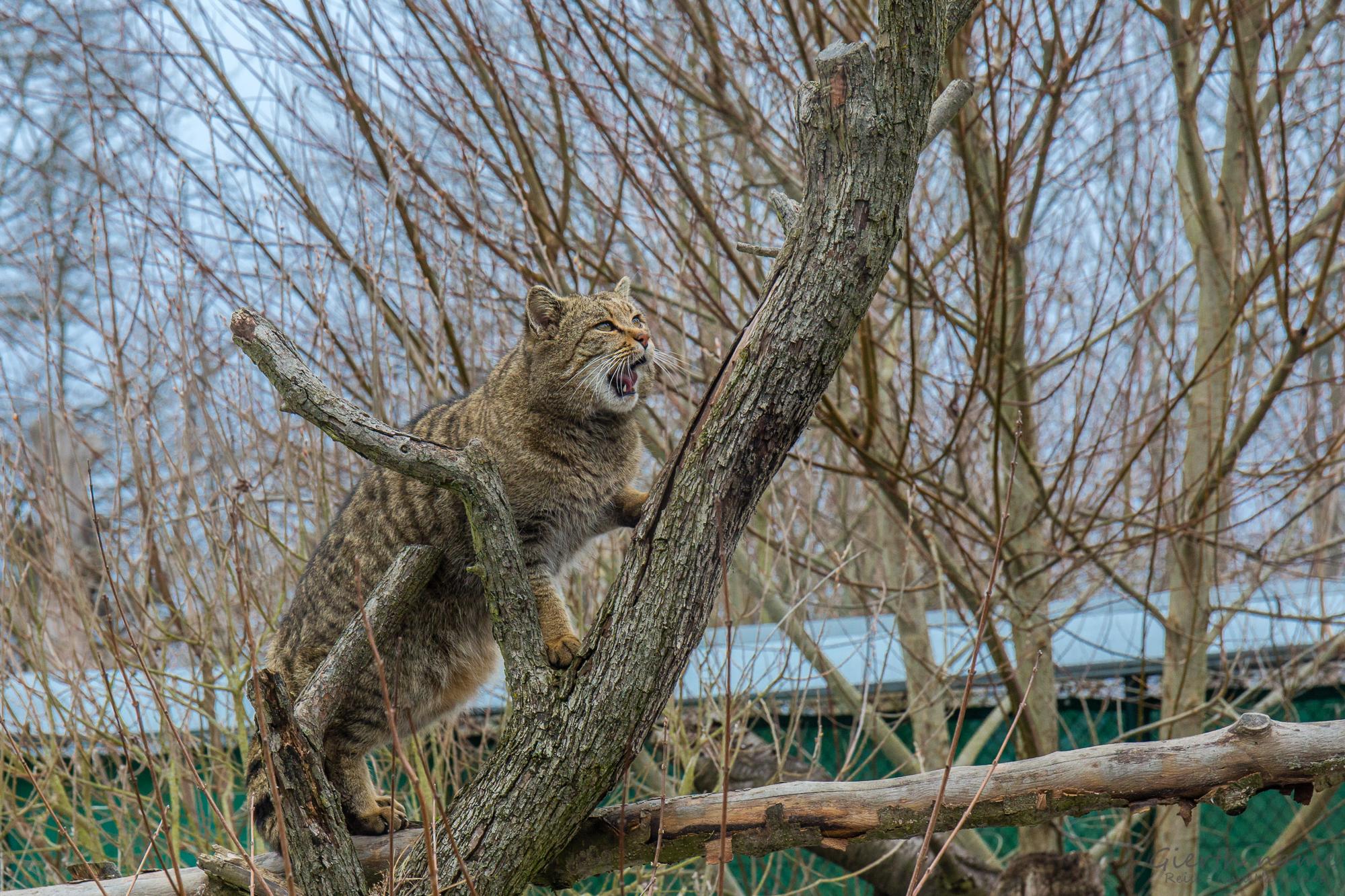 Das Wildkatzendorf Hütscheroda