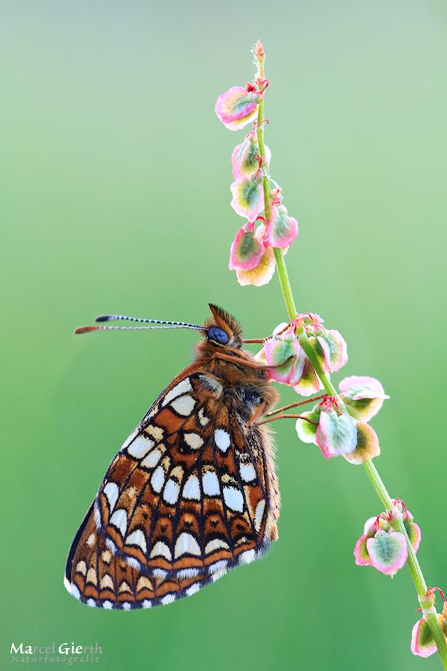 Schmetterlinge für ein bisschen mehr Sommer Teil 1