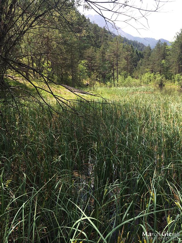 Zuflussbereich zu einem Habitat