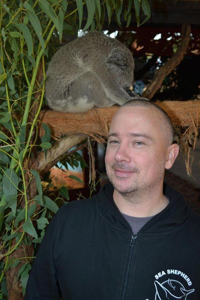 Celle und Koala