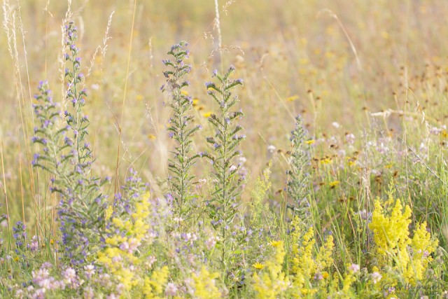 Der Freisinger Buckl – ein durch die Isar geschaffener trockener Lebensraum