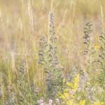 Blütenpracht auf dem Freisinger Buckl