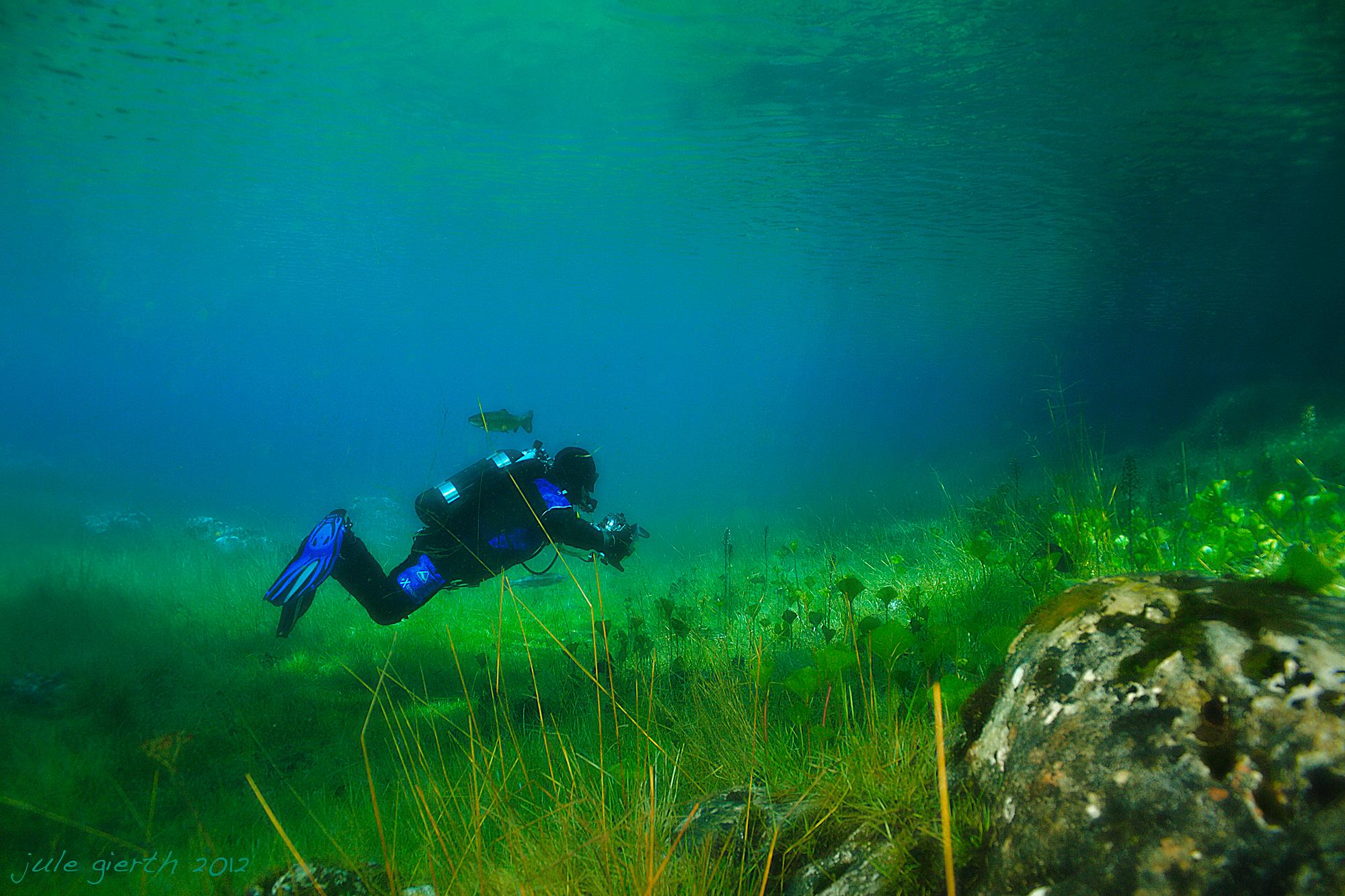 Flora, Fauna und Taucher im Grünen See