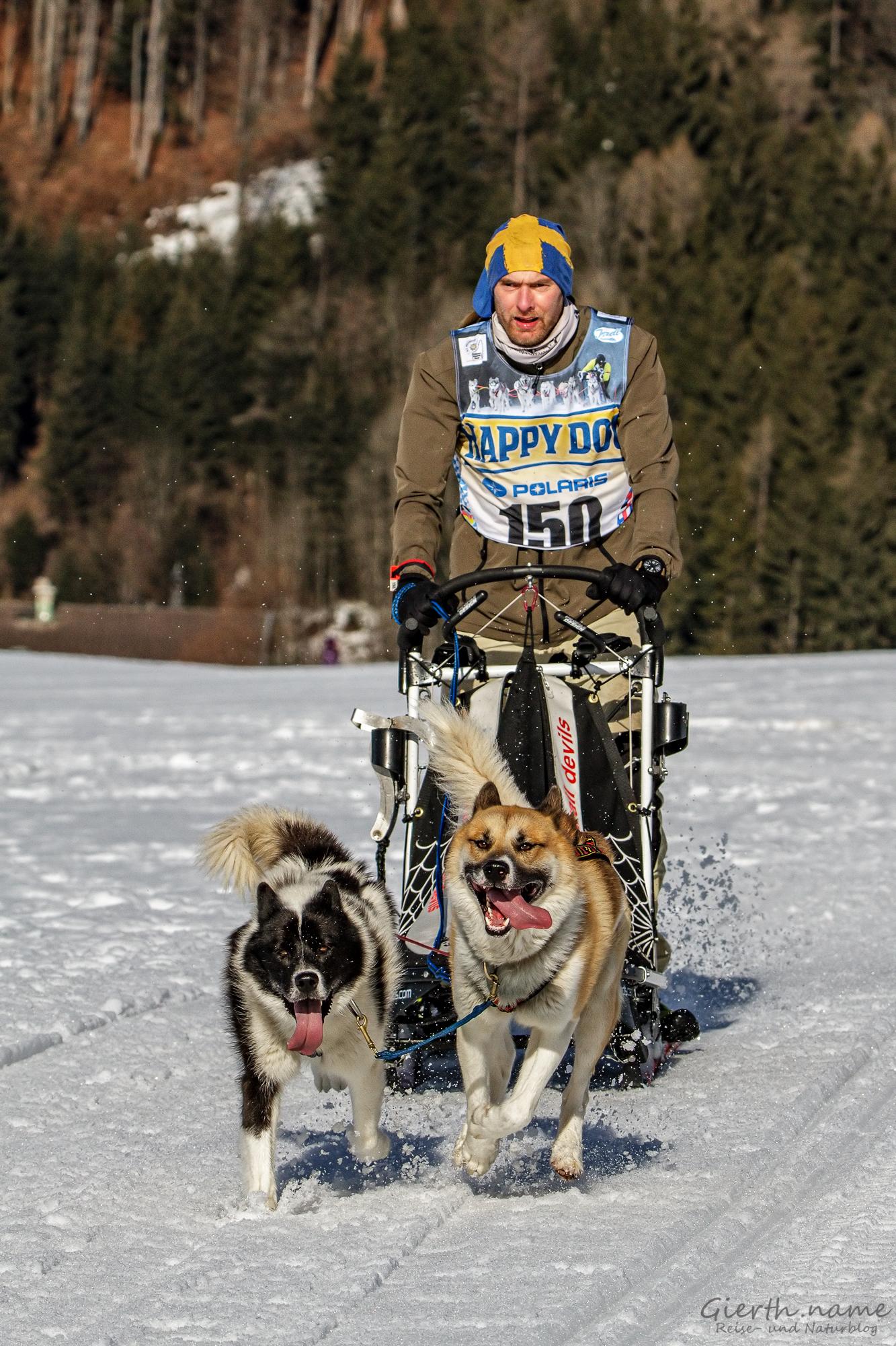 Schlittenhunderennen in Inzell, Musher mit der Nr. 150