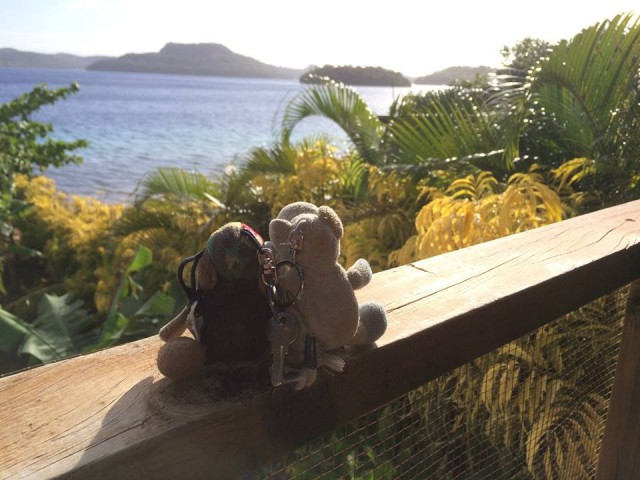 Schäfchen und Schweinchen blicken von unserer Terrasse auf die Südsee