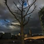 Baum an der Themse