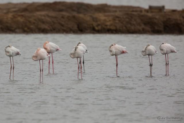 Flamingo, Sito das 4 Águas