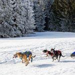 Marc Axtmann Sieger am der Kategorie SP4 (3-4 Hunde) über gesamt 15,8km